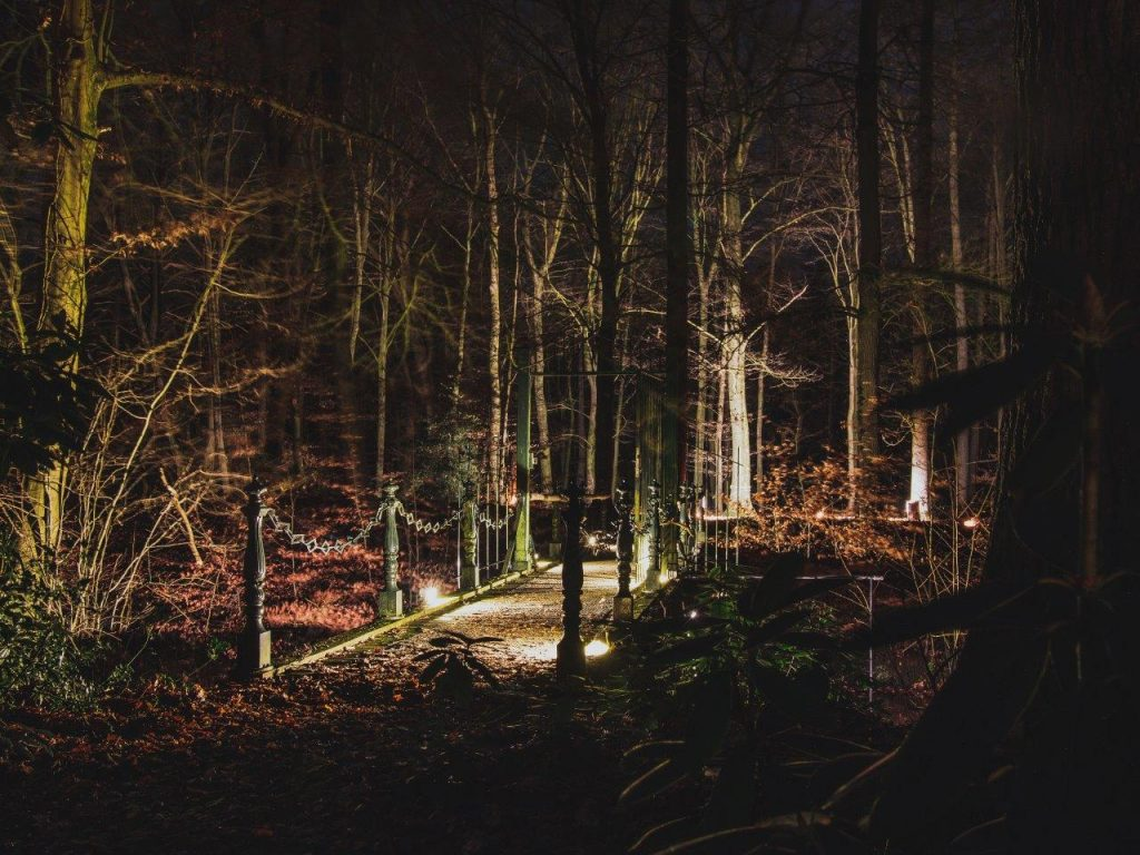 long exposure nacht fotografie bos met verlichting